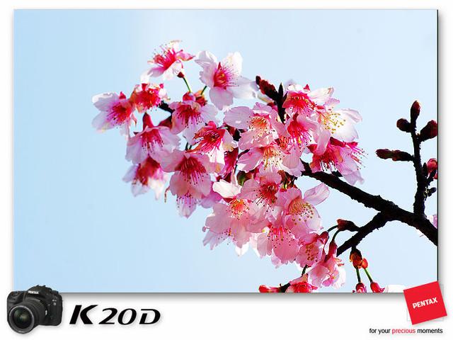 KIN_8939