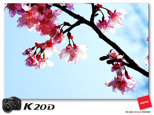 KIN_8942