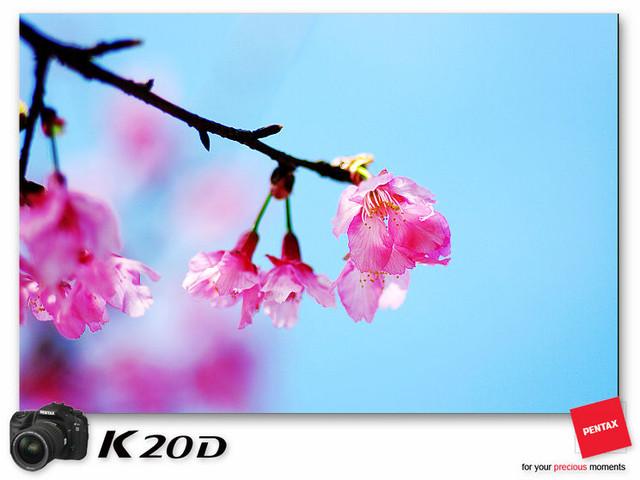KIN_8960