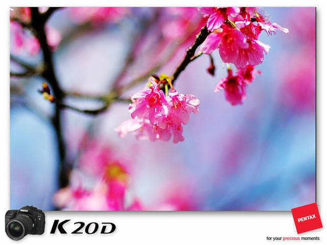 KIN_8982