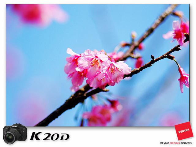 KIN_8984