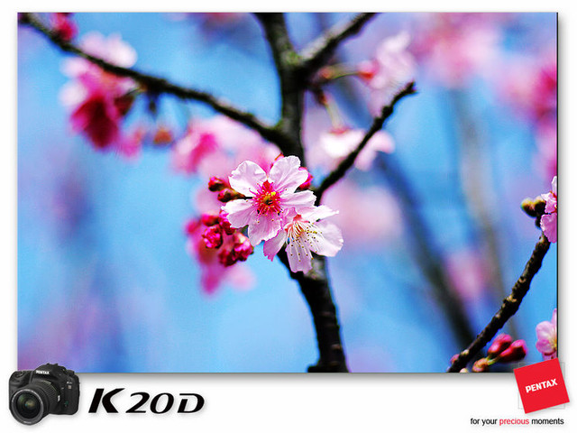 KIN_8987
