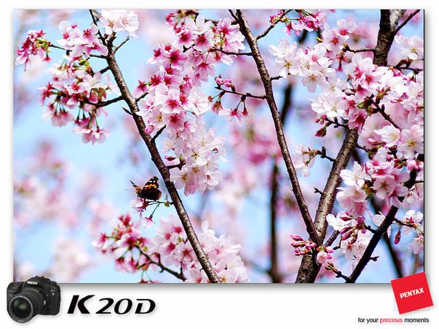 KIN_9082
