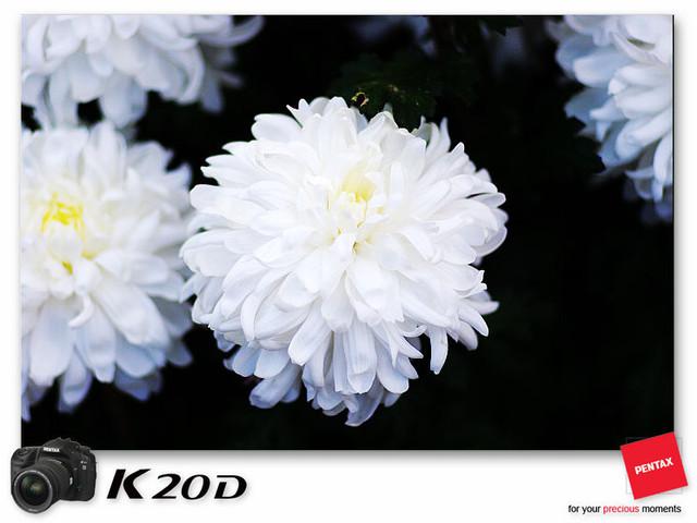 KIN_9126