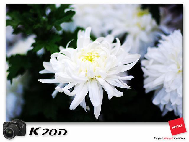 KIN_9131