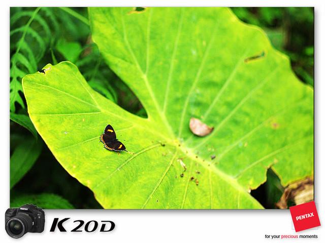 KIN_9154