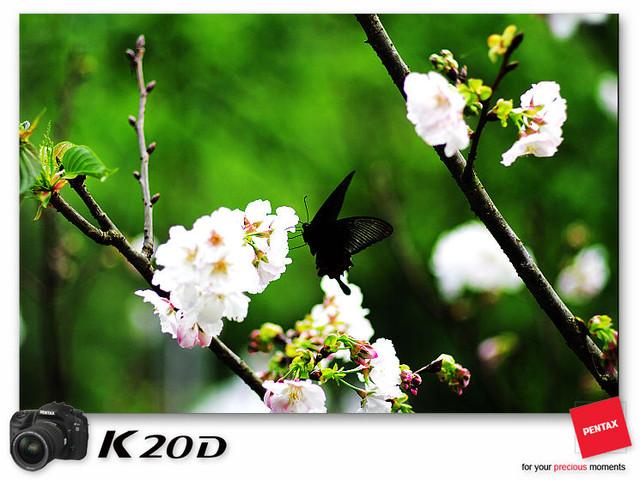 KIN_9167