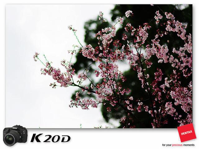 KIN_9176