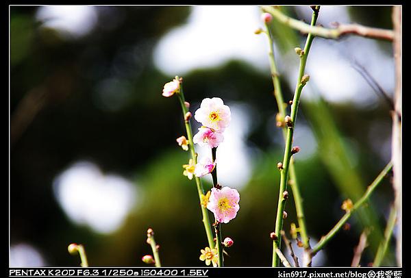 nEO_IMG_KIN_7260.jpg