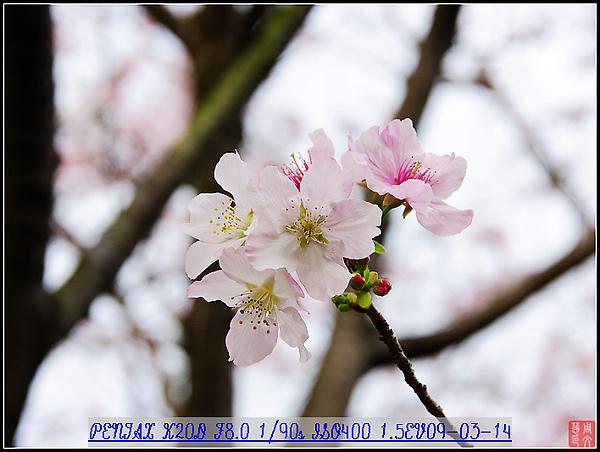 KIN_9673.jpg