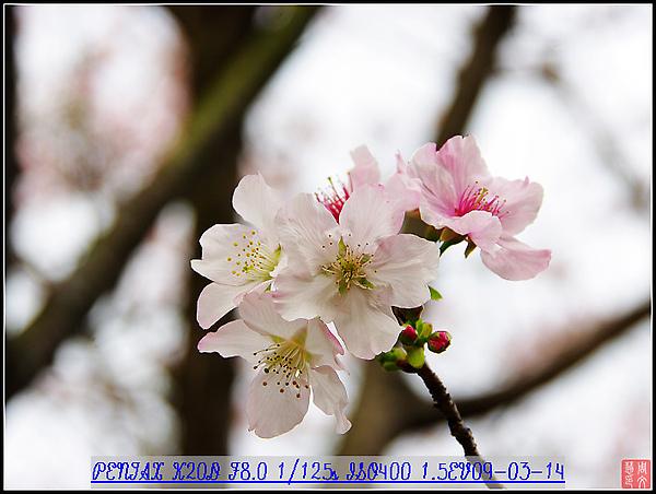 KIN_9675.jpg