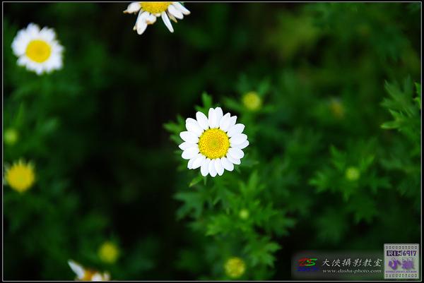 nEO_IMG_20100224-KIN_7448.jpg