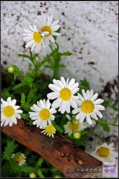 nEO_IMG_20080512-kin6917-2008-05-12_11-27-36.jpg