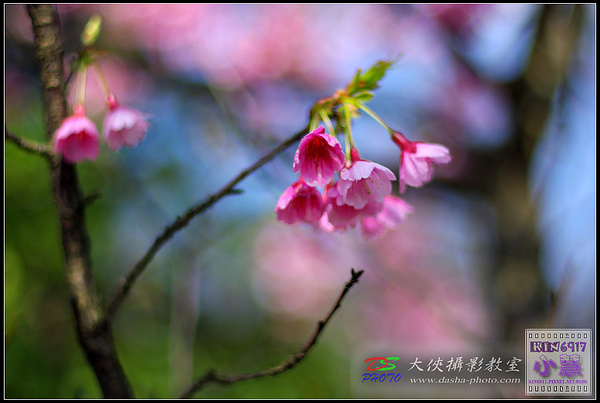 nEO_IMG_KIN_8112.jpg