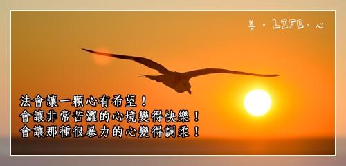 0519_seagull-