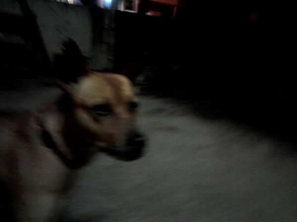 我們家的忠狗