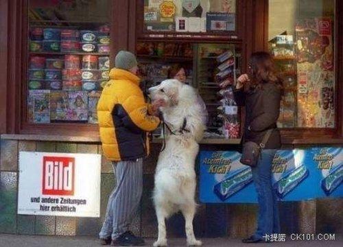 愛搞怪的狗狗