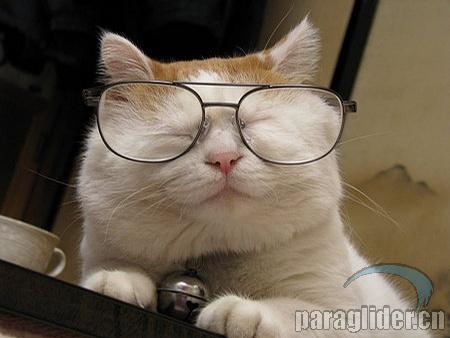 其實貓叔原來只是個不入流的小演員