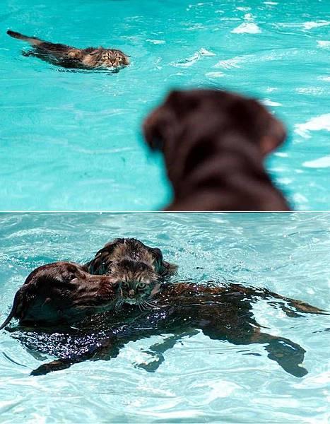 貓跟狗游泳