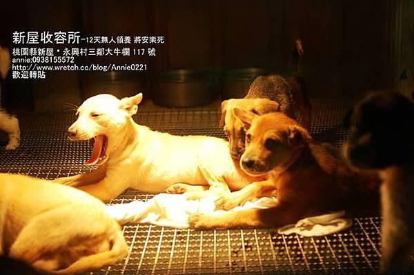 請領養這些可愛的狗狗吧