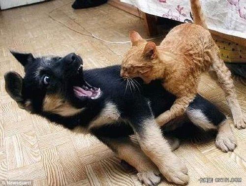 阿~娘~喂~竟然有一貓敢咬我、好大的膽子啊
