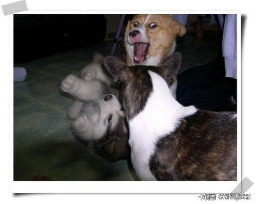 阿~娘~喂~我被兩隻狗嚇到了