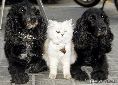 貓老大與兩位狗小弟