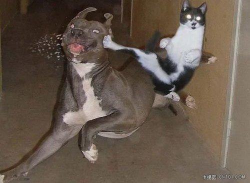 動物大爆笑
