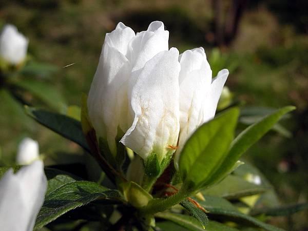 花卉集錦 074