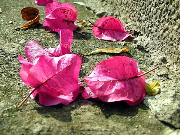 花卉集錦 087