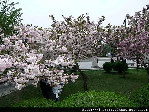 桃花與櫻花2