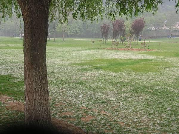 DSCN3000春暖花開時,下雪了嗎?