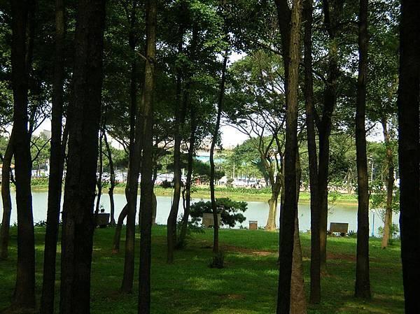 DSCN3165小樹林.jpg