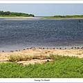 東沙潟湖邊水鳥.jpg