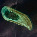 西沙北礁衛星NorthReef.jpg