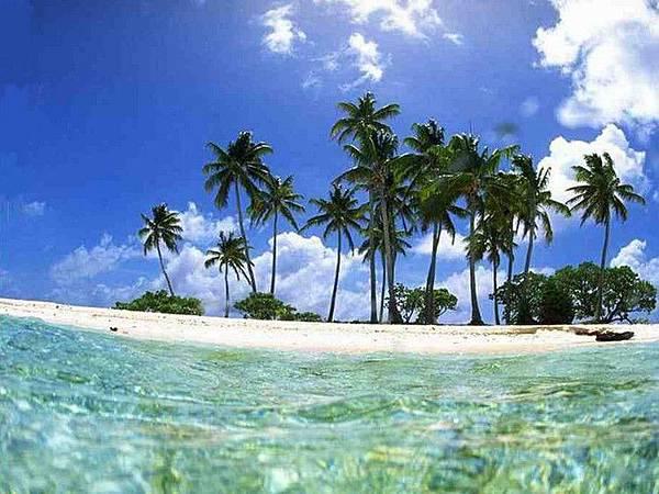 西沙七連嶼小島上的椰子.jpg