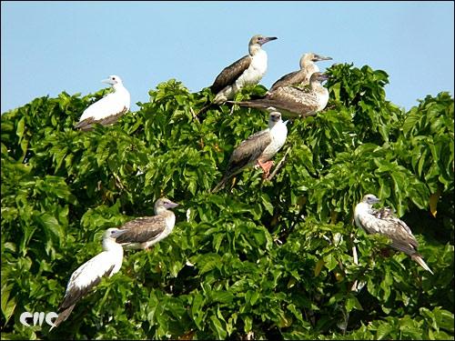 西沙東島海鳥的天堂.jpg