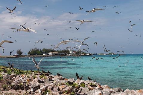 南沙彈丸礁人工島上的x子.jpg