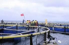 美濟島的養殖漁業.jpg