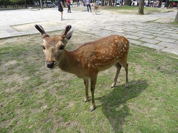 奈良車車之旅day5_6476.jpg