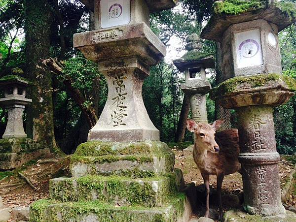 奈良車車之旅day5_4823.jpg