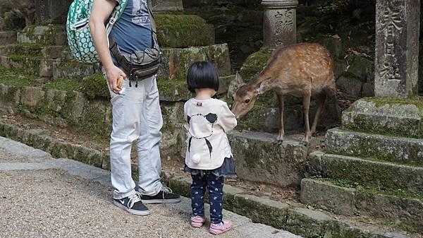 奈良車車之旅day5_5641.jpg