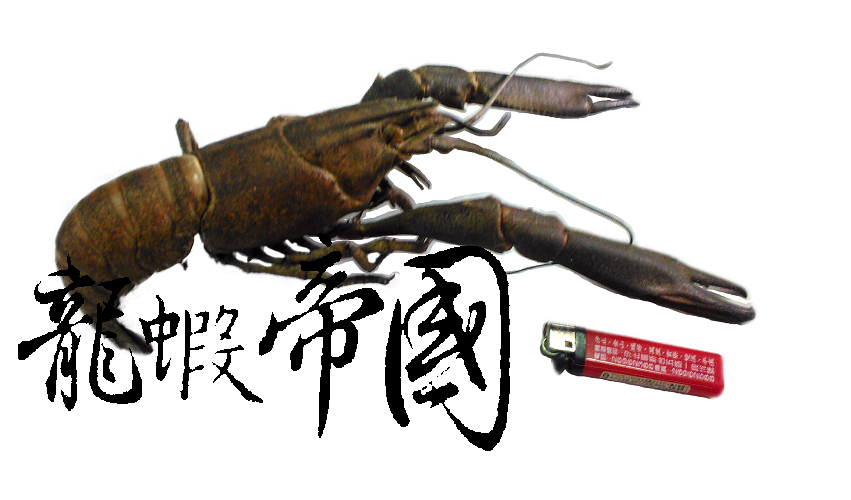 巨大澳洲龍蝦