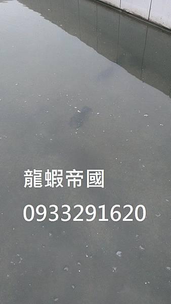IMAG0447