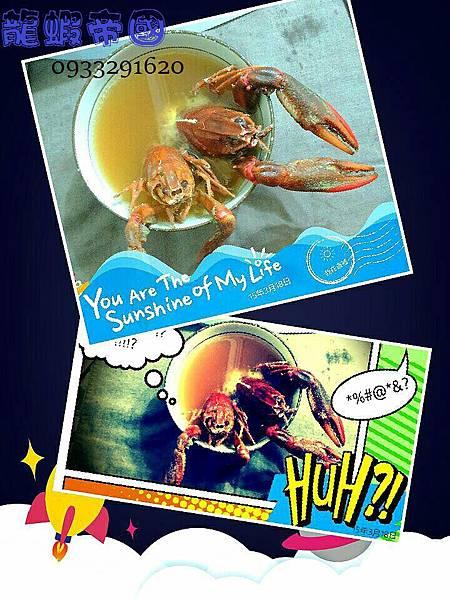 澳洲龍蝦料理