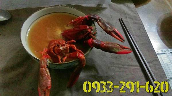 味增湯-澳洲龍蝦