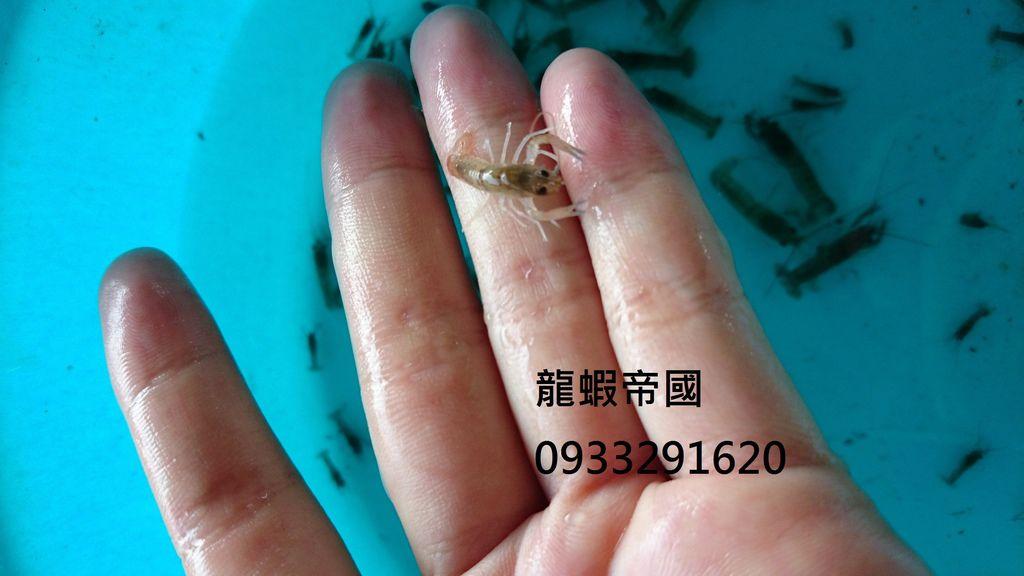 龍蝦帝國電話是0933291620