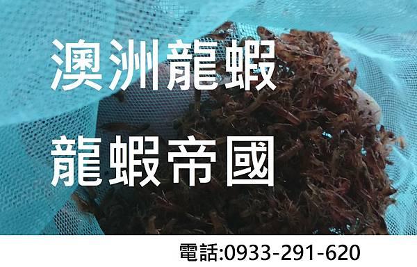 澳洲淡水龍蝦.JPG