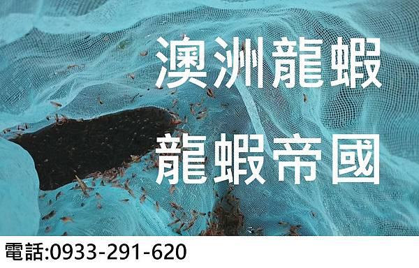 澳洲龍蝦 龍蝦帝國.JPG
