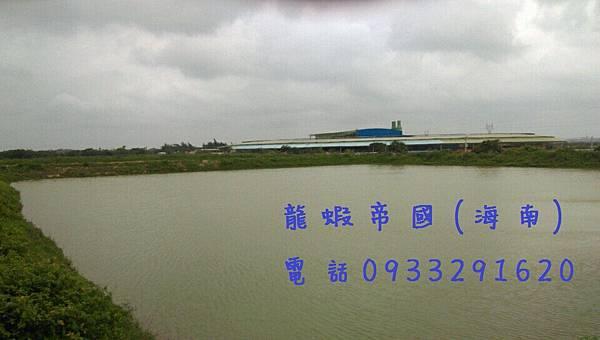 龍蝦帝國 0933291620.jpg